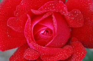 Conjuros de amor faciles y efectivos