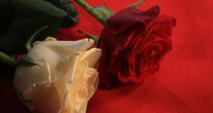 Hechizos de magia roja para el amor