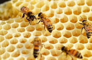 Hechizos de amor con miel y papel
