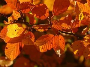Equinoccio de otoño. Rituales