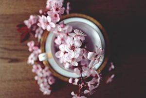 Pocion de amor flor de cerezo
