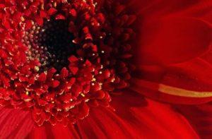 Amarres con sangre menstrual
