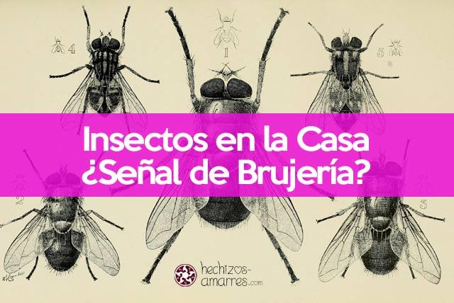 Insectos en la casa. Señal de brujeria