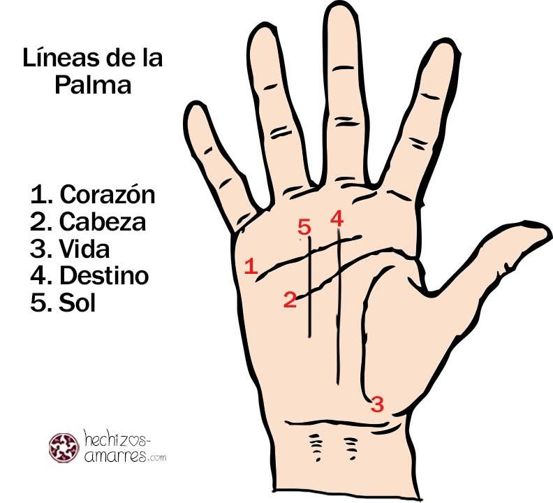 ¿Qué significan las líneas de la mano?