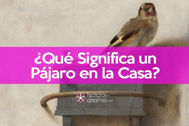 ¿Qué significa un pájaro en la casa?