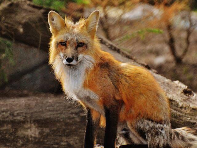 Animales Y Su Simbología Descubre Tu Animal Espiritual O Familiar