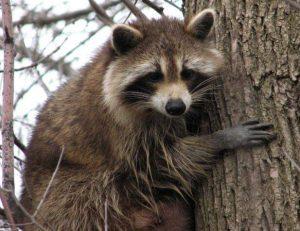 Animales y su significado