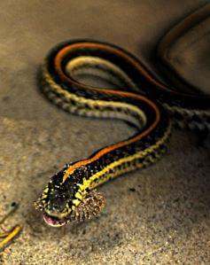 Serpientes y presagios