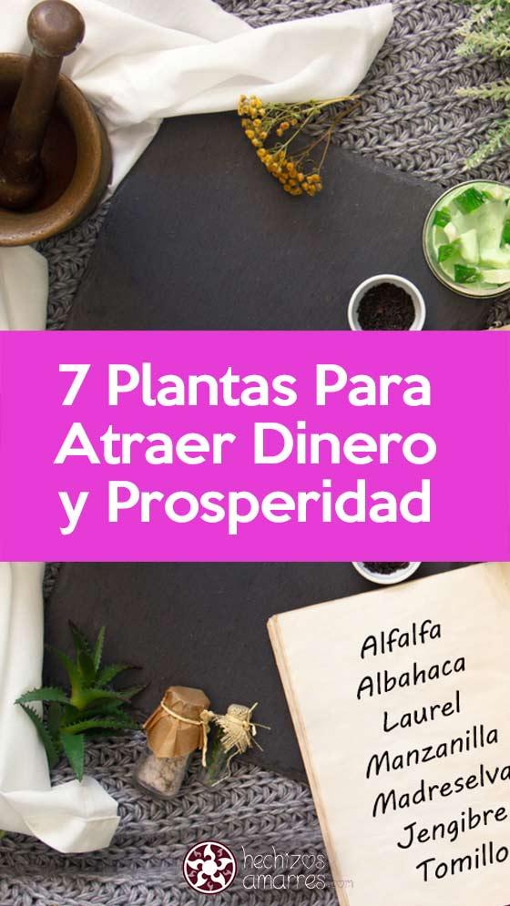 7 Plantas Para Atraer Dinero y Prosperidad con Magia Blanca