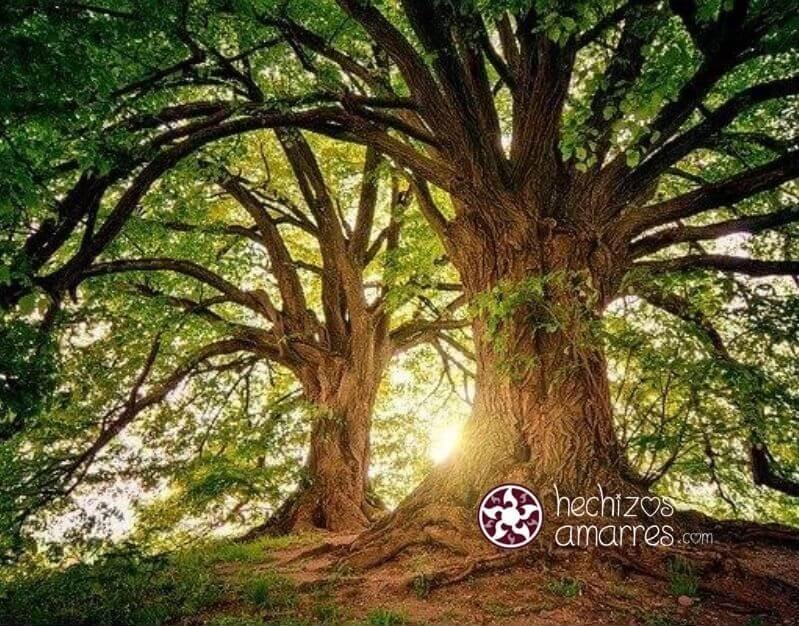 Guía de protección rápida para Brujas: Protege la naturaleza y el medio ambiente