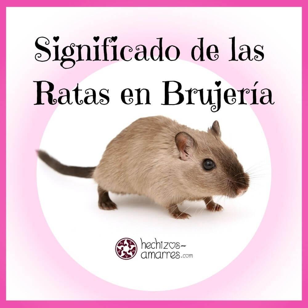 ¿Qué significan las ratas en la brujería? Simbolismo de la Rata