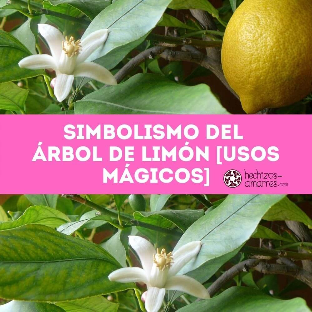 Simbolismo y Significado del Árbol de Limón [con Usos Mágicos]