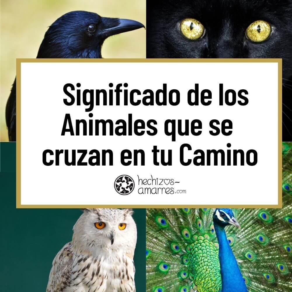 Significado de los Animales que se cruzan en tu Camino