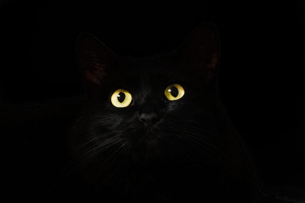 Qué significa que se cruce un gato negro en tu camino